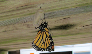 FIRST GENERATION FEMALE MONARCH - STAGE 4